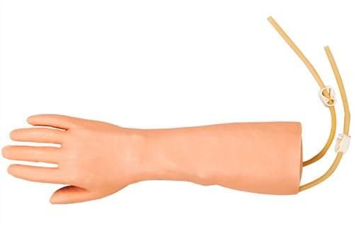 提供上海手臂医学模型价格多少钱 康津供