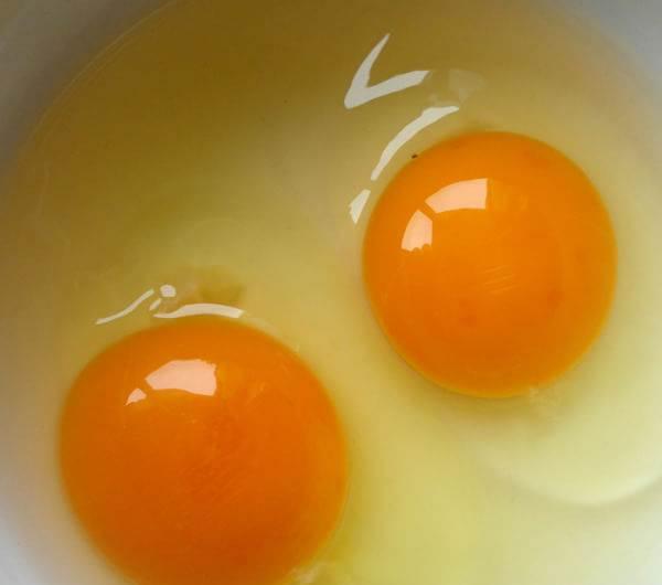 福州正宗土鸡蛋提供商