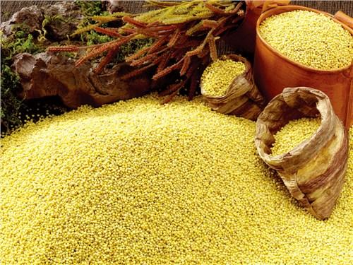 富硒小米营养价值