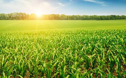 淄博博信农业科技有限公司
