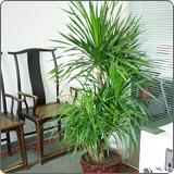 徐汇区专业室内植物出租哪家好,室内植物出租