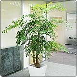 长宁区专业室内植物出租高性价比,室内植物出租