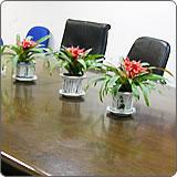 专业室内植物出租价格「慧枫供应」