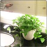 上海口碑好室内植物出租方案,室内植物出租