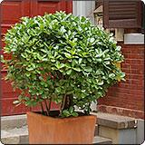 金山区办公室室内植物出租哪家好,室内植物出租
