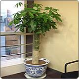 闵行区室内植物出租厂家直供,室内植物出租