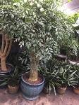 虹口区优质基地批发好货源好价格 铸造辉煌「上海明升花木园艺供应」