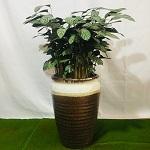 上海松江绿植销售哪家好 推荐咨询「上海明升花木园艺供应」