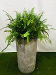 常州绿植销售厂商「上海明升花木园艺供应」