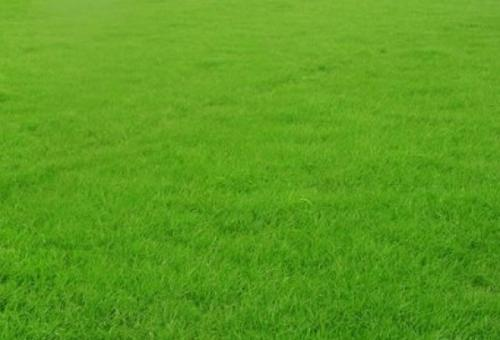 人造草坪福建人造草坪电话,人造草坪