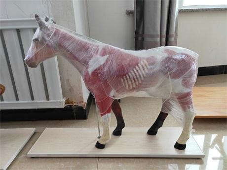 北京動物模型報價「新鄉市禾力教學設備供應」