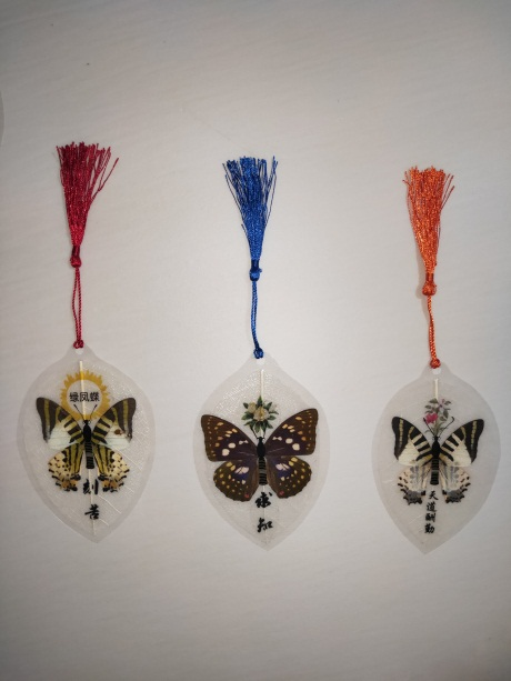 四川蝴蝶标本哪有卖,蝴蝶标本