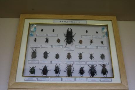 河南昆虫分类标本厂家直销「新乡市禾力教学设备供应」