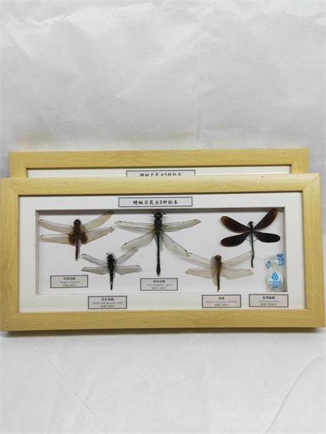 贵州昆虫分类标本生产厂家「新乡市禾力教学设备供应」