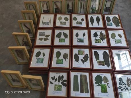 焦作植物病害标本找哪家,植物病害标本