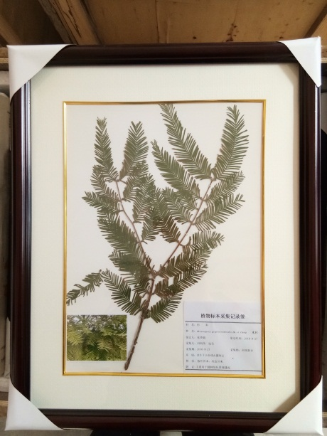 山东植物腊叶标本选哪家,植物腊叶标本