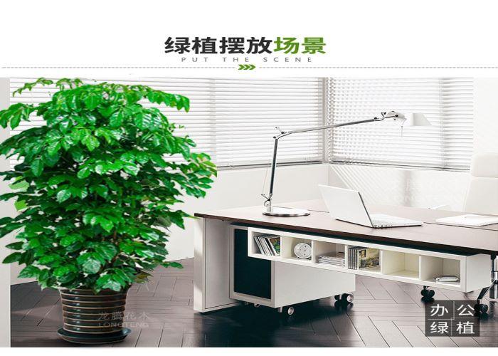 深圳职业幸福树专业团队在线服务,幸福树