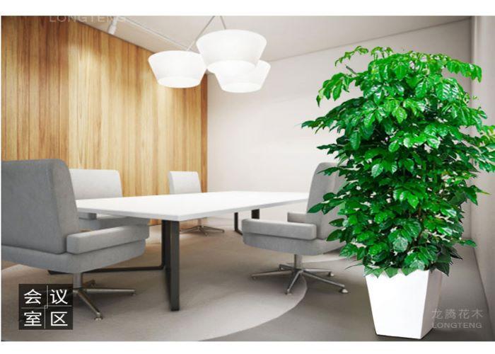 盐田区职业幸福树***咨询 诚信为本「深圳市绿园轩园林花卉供应」