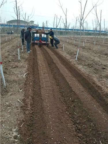 山东优质花生播种机效果好 值得信赖 河源市李旭农业机械设备供应