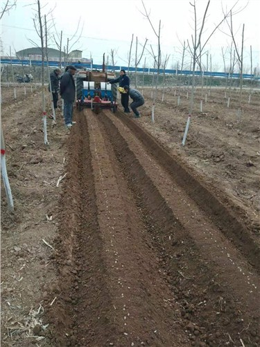 河南全自动花生播种机值得信赖 值得信赖 河源市李旭农业机械设备供应