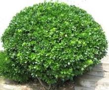绿化苗木品牌企业,绿化苗木