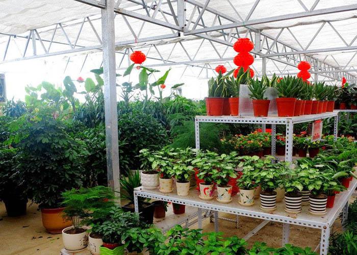 昆明鲜花温室大棚工程 值得信赖 云南姚前达温室大棚工程供应