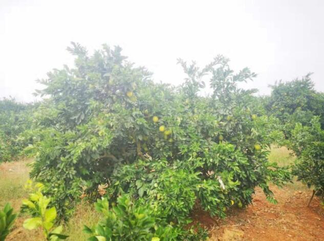 内蒙古柳惠高品质的选择 和谐共赢 惠农化工供应