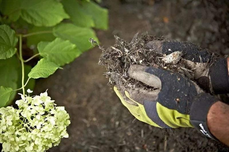 安丘生物菌有机肥国标,生物菌有机肥