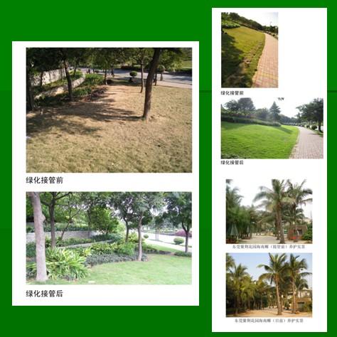 奉贤区优良绿化养护报价,绿化养护