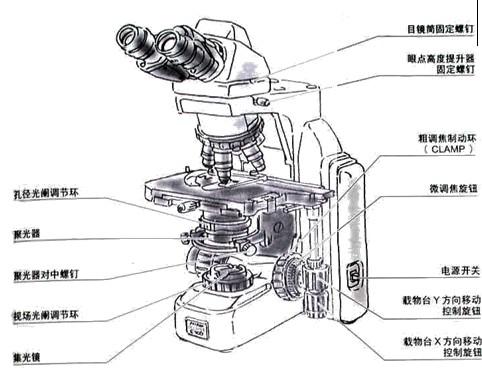 倒置荧光显微镜供货商,显微镜