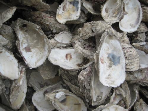 江苏正品杜蛎壳粉推荐厂家,杜蛎壳粉