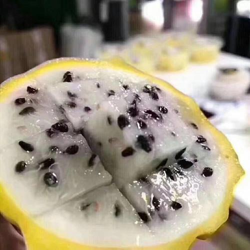 黄皮火龙果树苗嫁接技术 厦门耕泓农业科技供应