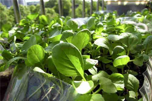 吳中區生鮮配送報價 蘇州禾子生態食品供應