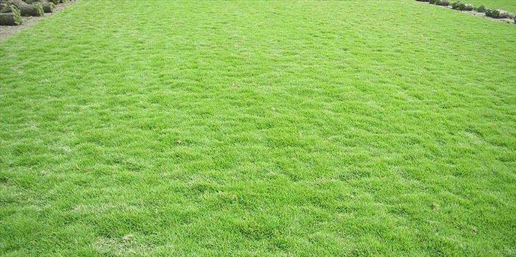优质草皮采购 创造辉煌「悠时光园艺供应」
