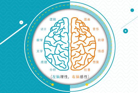 淄博幼儿右脑开发的好处,右脑开发