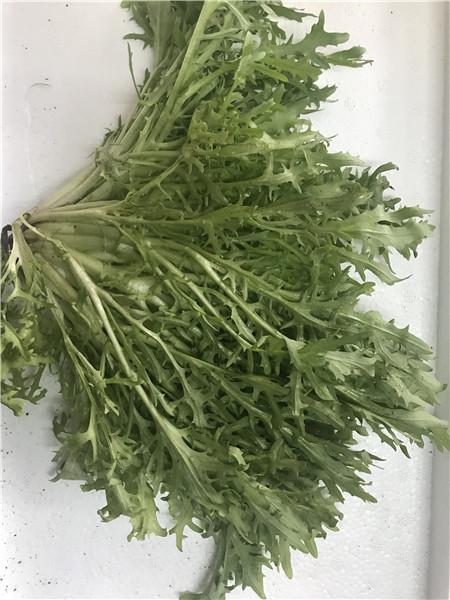 绿色有机蔬菜采购,有机蔬菜