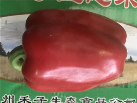 昆山市供应绿色有机蔬菜 苏州禾子生态食品供应