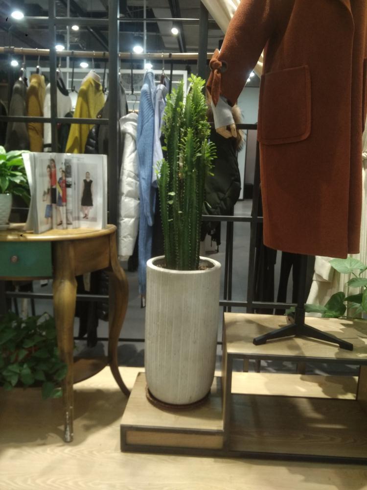 新郑专业植物软装设计选哪家,植物软装