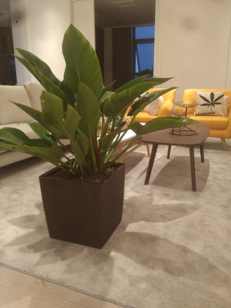 郑州植物软装设计推荐,植物软装