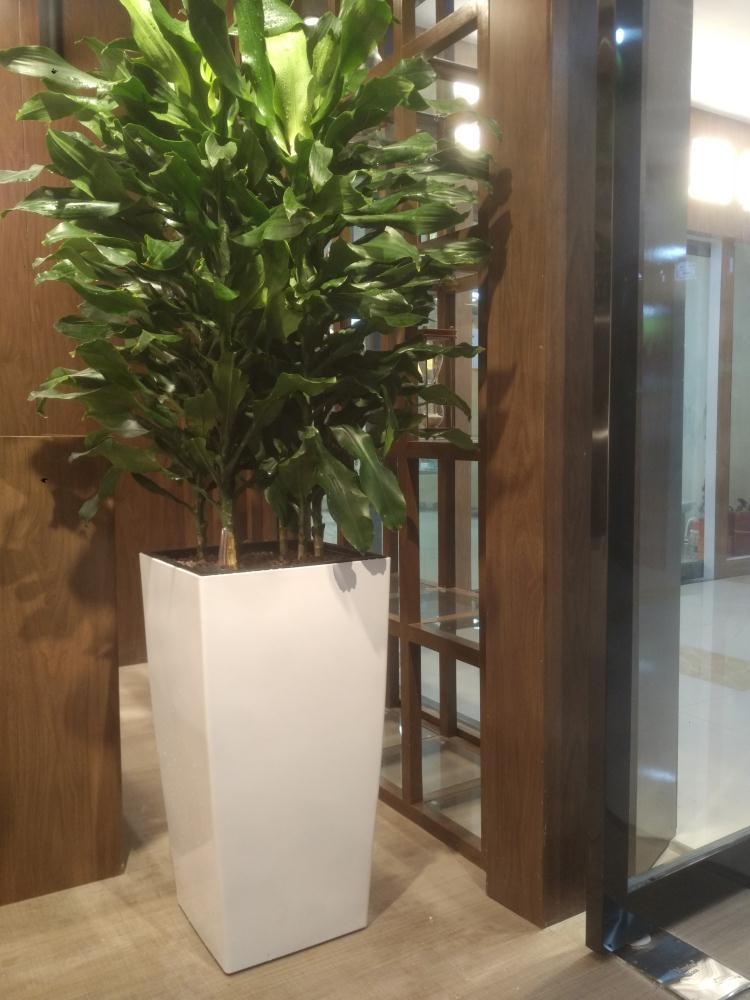 荥阳植物软装设计费用,植物软装