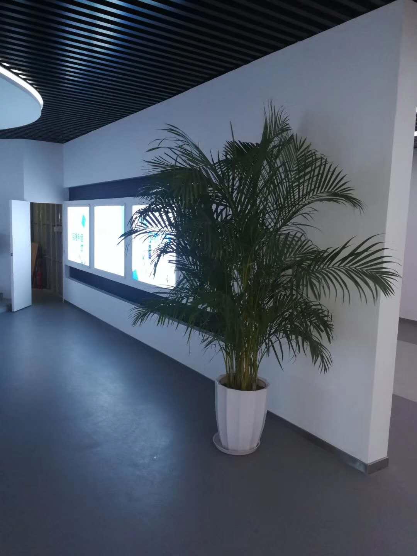 南安办公室盆栽,办公室盆栽