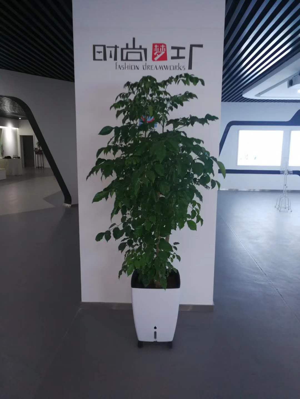 石狮绿植花卉摆放,绿植花卉