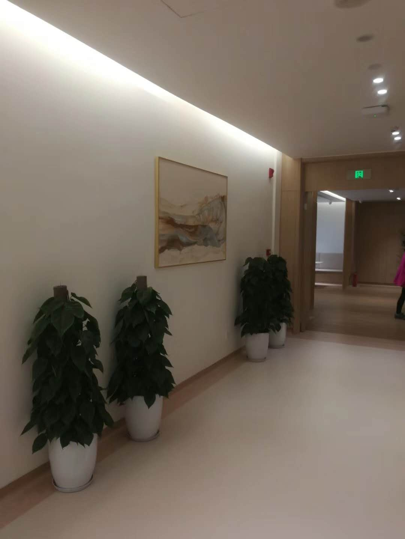 惠安绿植花卉租赁公司,绿植花卉