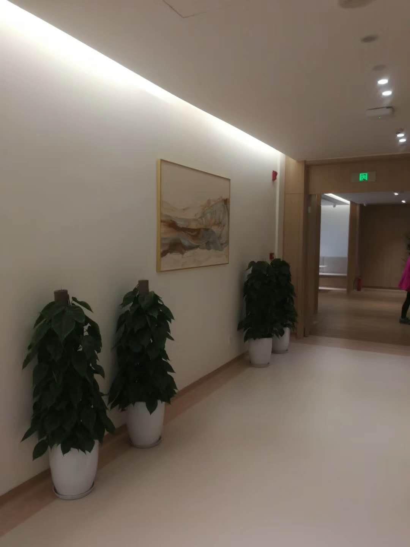 豐澤辦公室綠植佈置,辦公室綠植