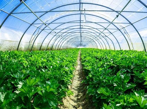 湖北农业大棚直销 欢迎咨询「湖北农欣温室大棚供应」