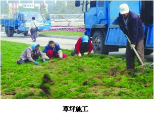 松江区口碑好园林绿化哪家专业,园林绿化