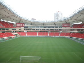 浙江原装足球场人造草坪价格,足球场人造草坪