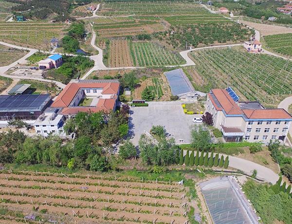 威海正品烟台葡萄酒代加工厂需要多少钱 服务至上「烟台欧斐堡庄园葡萄酒供应」