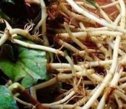 貴州魚腥草提取物OEM代加工 南京澤朗生物科技供應