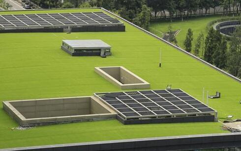 金山区知名屋顶绿化高品质的选择,屋顶绿化